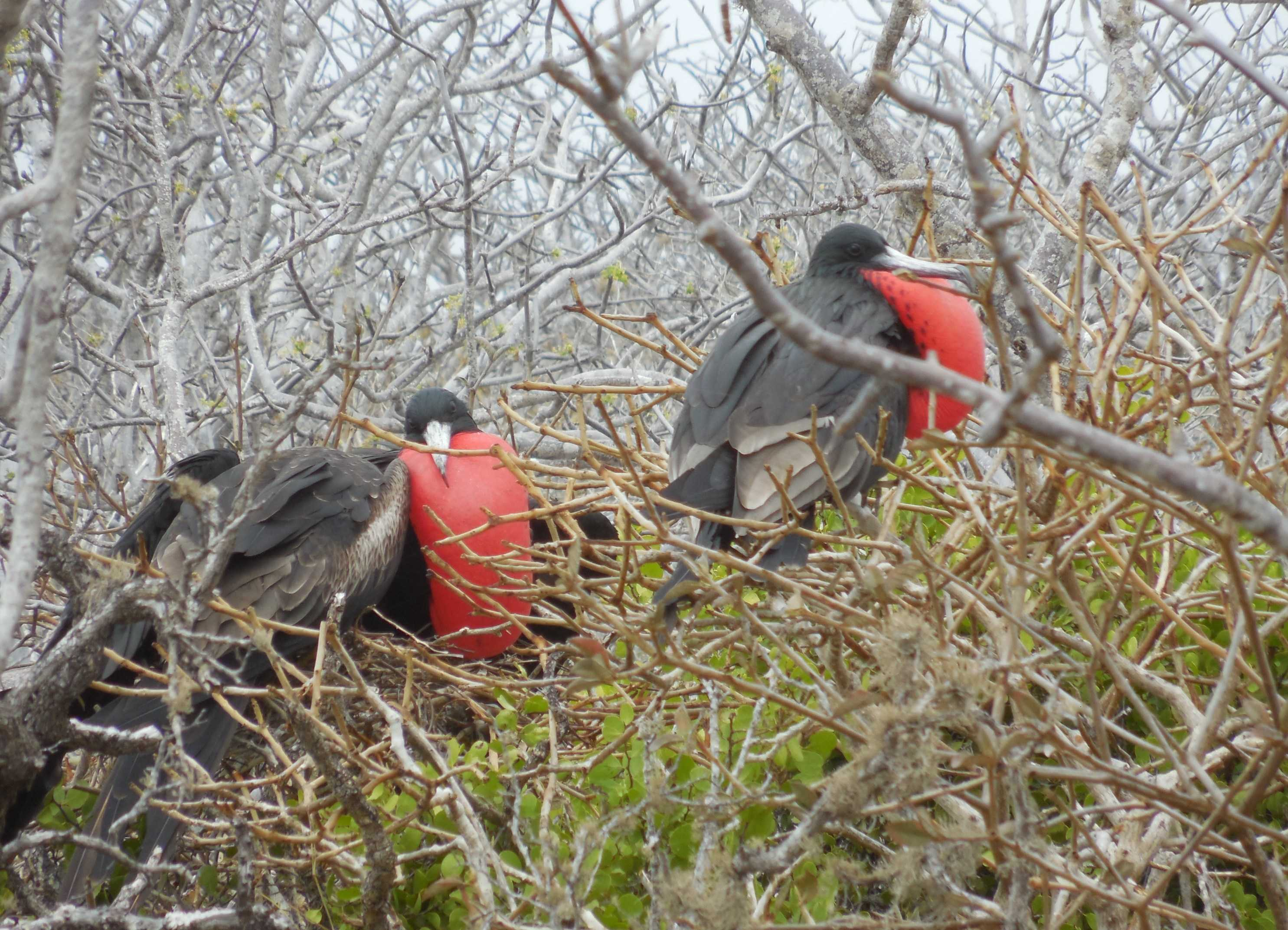 Close Encounters with Nature – Cruising the Galapagos Islands