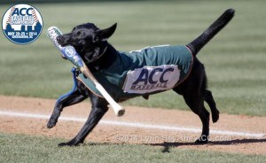 The Greensboro Grasshoppers Bat Dog!