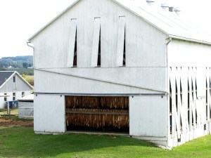 Lancaster County barn with slatted and sliding doors open for drying tobacco