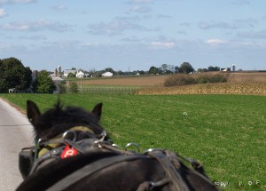 View of farm area from buggy ride