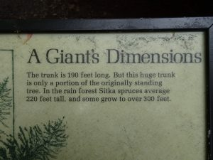 A Giant's Dimensions