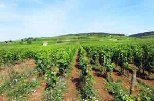 Cycling through the Vineyards of Burgundy