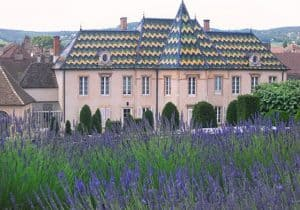 Lavender Fields - Fortress Gardens in front of the Hotel Dieu