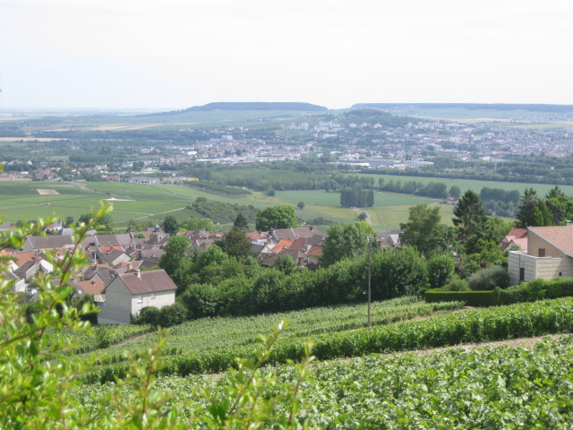 Overlooking the Vineyards in Hautvilliers. Frances Champagne district..