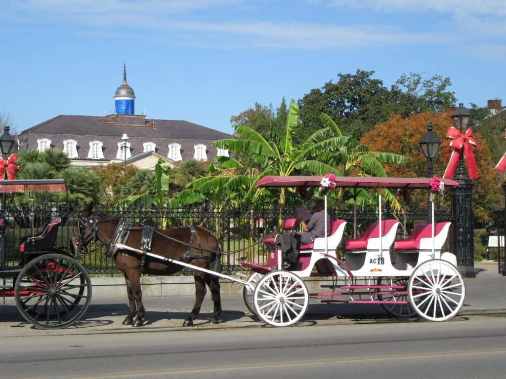 Taking a leisurely carriage ride around New Orleans.