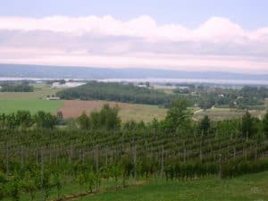 Marvelous View of Luckett Vineyards all the way to Minas Basin